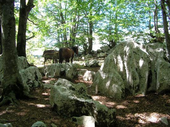 Il bosco di pietra